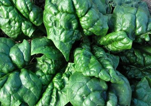 Problemi di memoria? Mangia gli spinaci