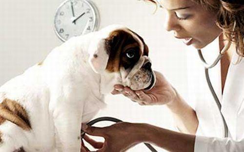 Come avere il veterinario a portata di mouse